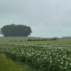 Rain on a farm