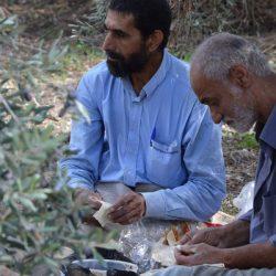 harvest field refugees